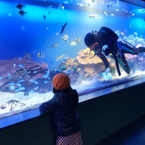 ダウン症児の成長日記 水族館