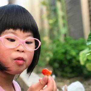 ダウン症児の成長日記 家庭菜園 いちご