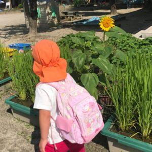 ダウン症児の成長日記 園庭のひまわり